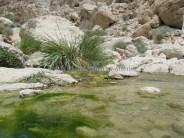 Israël - Parc En Gedi