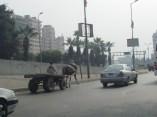 Le Caire - Sur la route, les charrues au milieu des voitures