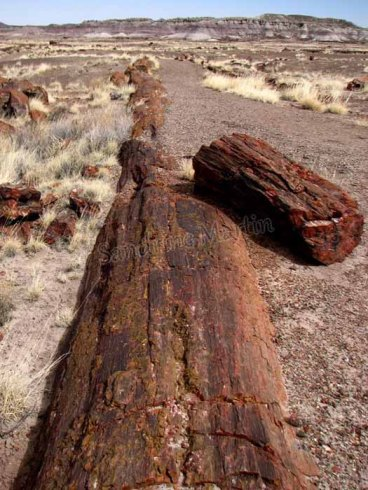 Arizona - Parc national Petrified Forest - Long logs trail