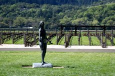 Californie - Napa - Robert Mondavy Winery, vignes