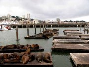 Californie - San Francisco - Waterfront - Otaries