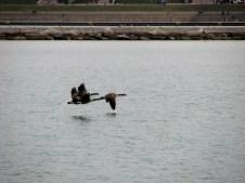 Ohio - Chicago - River walk, canards