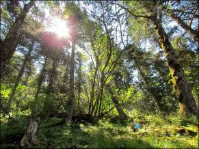 Huanglong - Sur le chemin, la forêt