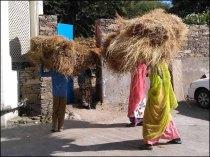 Udaipur - Au hasard des rues, gens