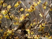 Grenade - Alhambra, oiseau